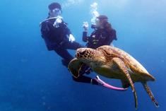 奄美体験ダイビングウミガメと泳ごう