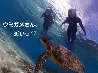 奄美大島ウミガメスイム ウミガメがすぐ目の前に¨