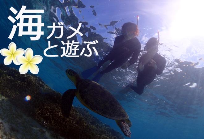 奄美大島海がめシュノーケル