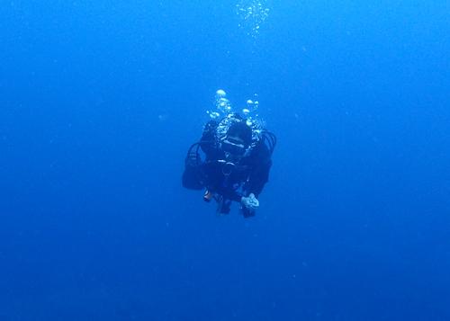 奄美ダイビング クジラの予定が・・・・。