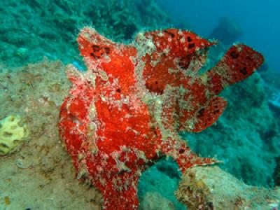 奄美ダイビング 海に入れないストレスMAX
