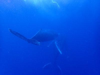 ホエールスイム ラブラブなクジラのペア!!