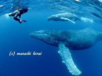 奄美ホエールスイム&ウォッチング 親子クジラに愛されたショップさん☆