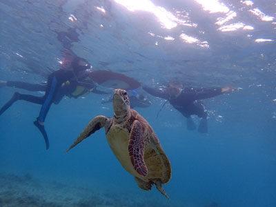 奄美シュノーケル ウミガメに遊んでもらいました。