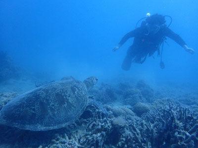 奄美ダイビング 半年ぶりのダイビングはビーチで♪