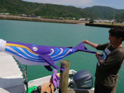 奄美ダイビング 端午の節句には鯉のぼりではなく鯨のぼり☆