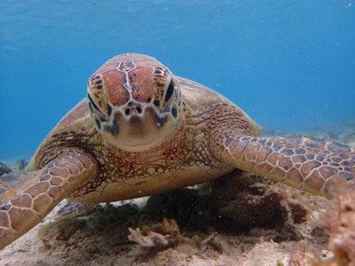 奄美海がめシュノーケル カメとまったり