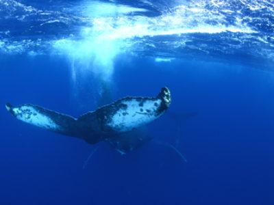 奄美ホエールスイム&奄美ダイビング クジラもダイビングも☆