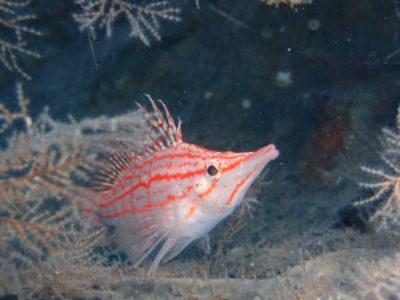 奄美ダイビング 湾内の深場も攻めてきました♪