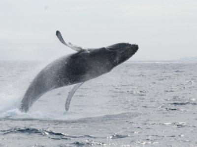 奄美ホエールスイム&ウォッチング 今日は長めのまったりクジラ!!