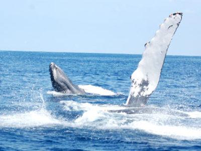 奄美ホエールスイム&ウォッチング クジラ日和