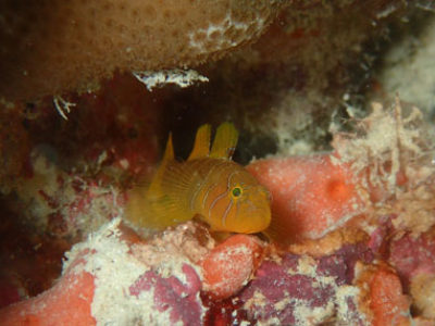 奄美ダイビング 幼魚もまだまだいてくれます☆